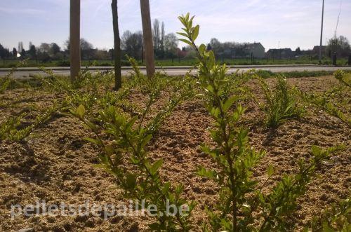 pellets-de-paille-plantation-publique